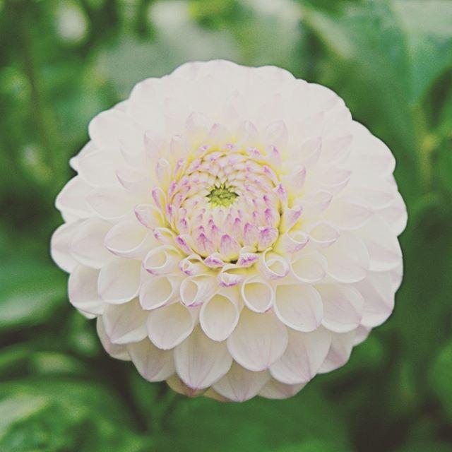 PhotoDiaryゆったリナは、洗練された日本人女性の上質なおもてなしの個室アロママッサージサロン。#御成門メンズエステ#新橋メンズエステゆったリナ#個室マッサージ#メンズエステ#マッサージ新橋#アロママッサージ #アロマ